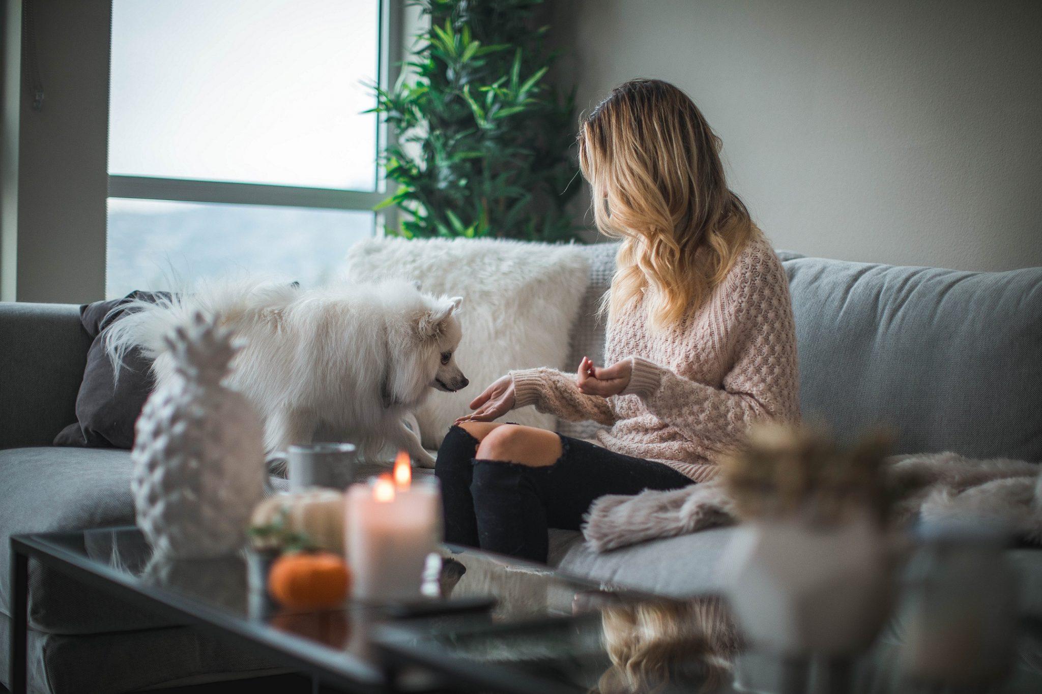 Hier würden Sie eine Person sehen, die ihrem Hund auf der Couch etwas zu fressen gibt